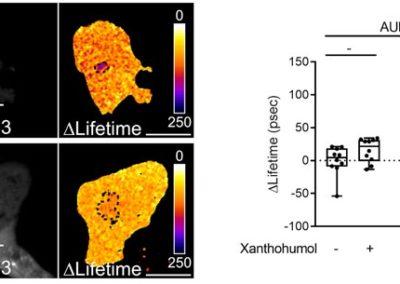 mitochondrial-aurora-kinase-a-induces-mitophagy-graph
